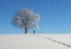Raquettes à neige dans le Jura